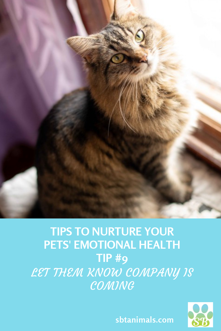 Tips To Nurture Your Pets Emotional Health Tip 9 Let Them Know Company Is Coming New People In The House Shifts The Ener Healthy Pets Your Pet Dog Facts