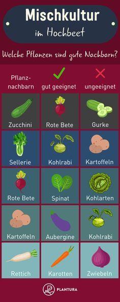 Photo of Hochbeet bepflanzen: Pflanzplan, Mischkultur & Gründüngung
