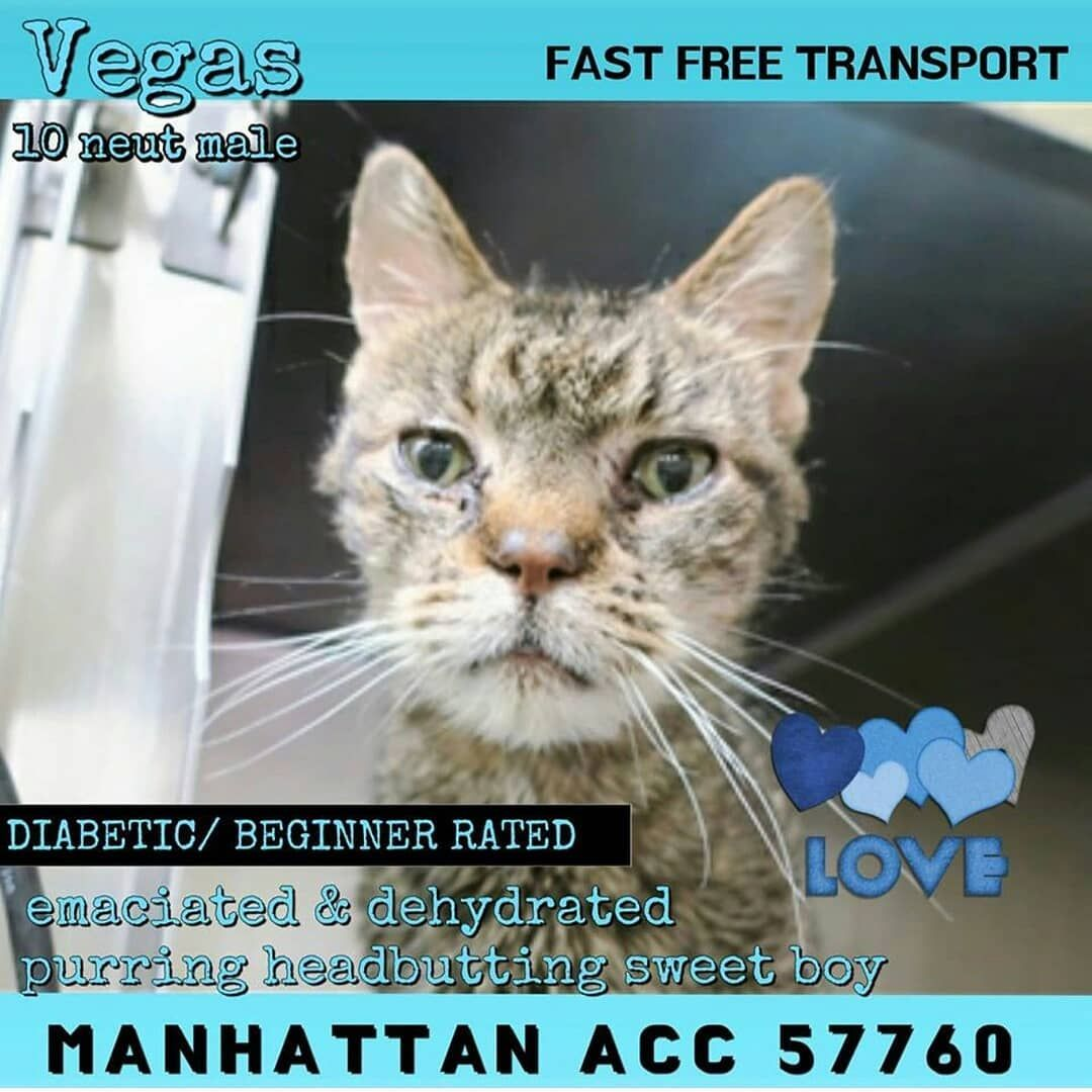 Watch The Best Youtube Videos Online Repost Poesrescuefund Get Repost Eight Beautiful Cats On The Kill List In Nyc Toda Cats Dogs Online Animal Rescue