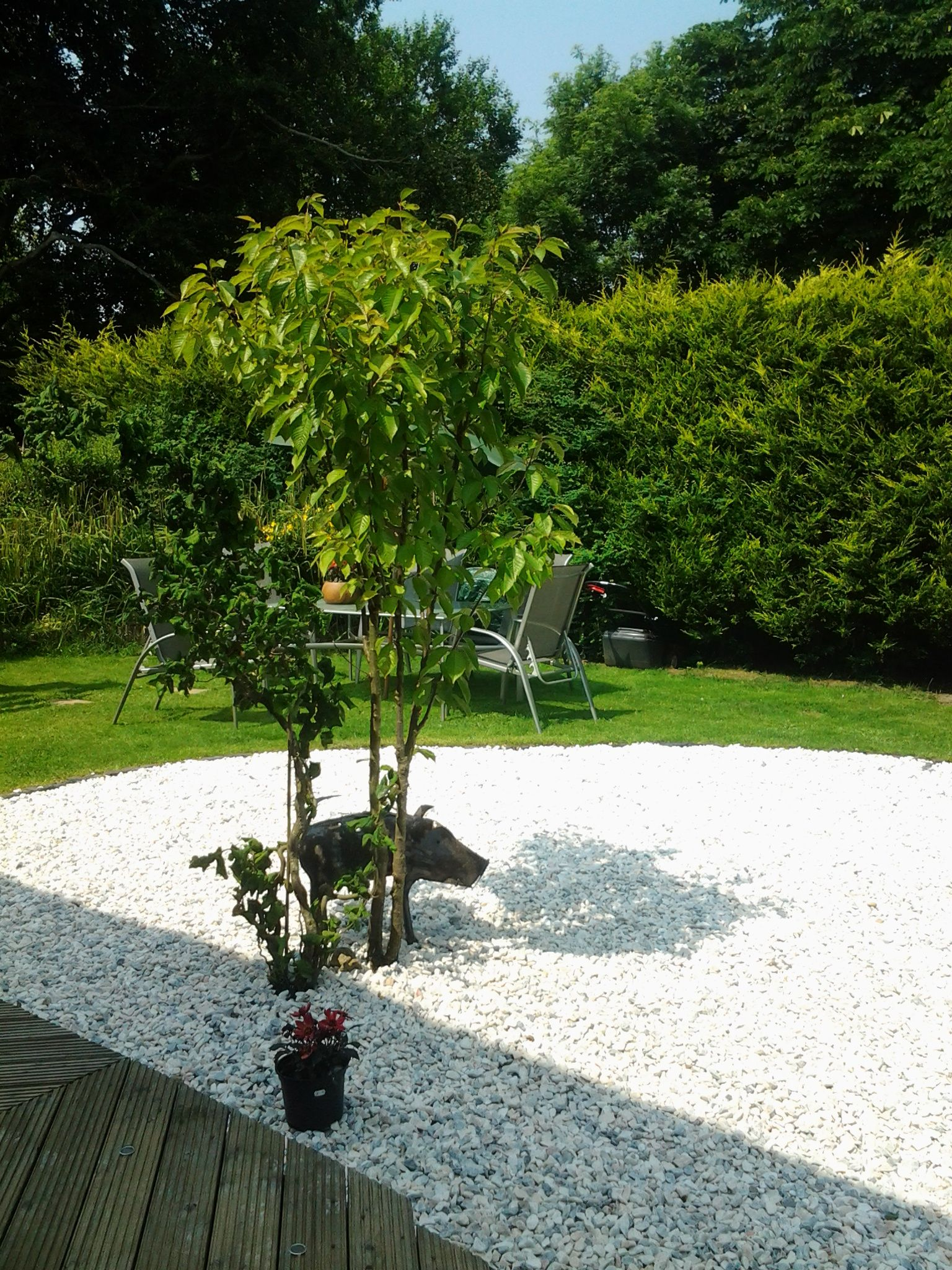 20mm Flamingo Gravel- Elegant and stylish, perfect for contrasting ...