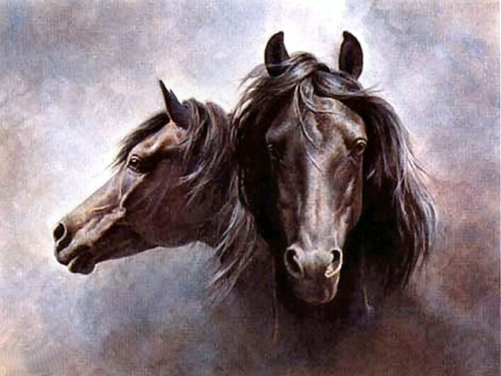 Watercolor Paintings of Horses | - Horse, art, black, equine, Fred Stone, head study, horse, painting ...