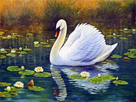 Swan and lotus desktop nexus wallpapers beautiful - Swan wallpapers for desktop ...