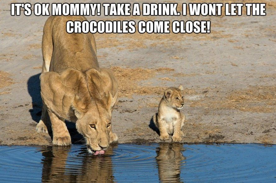 Cute Lion Cub Tries His Best To Roar But Squeaks Instead