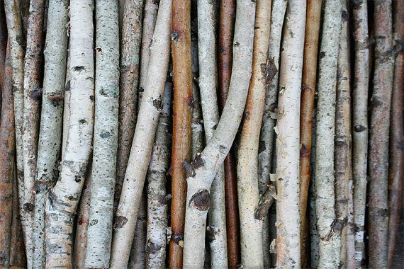 White Birch Branches Birch Wood Logs Paper Birch Sticks