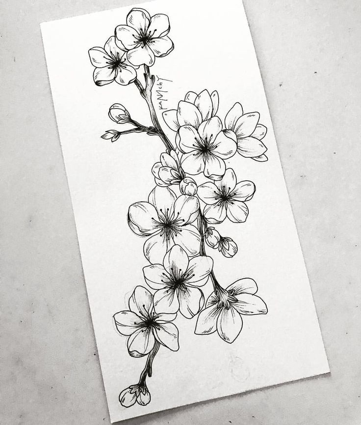 Learn To Draw A Realistic Rose Cherryblossom Draw Learn Realistic Rose Flower Drawing Beautiful Flower Drawings Realistic Flower Drawing