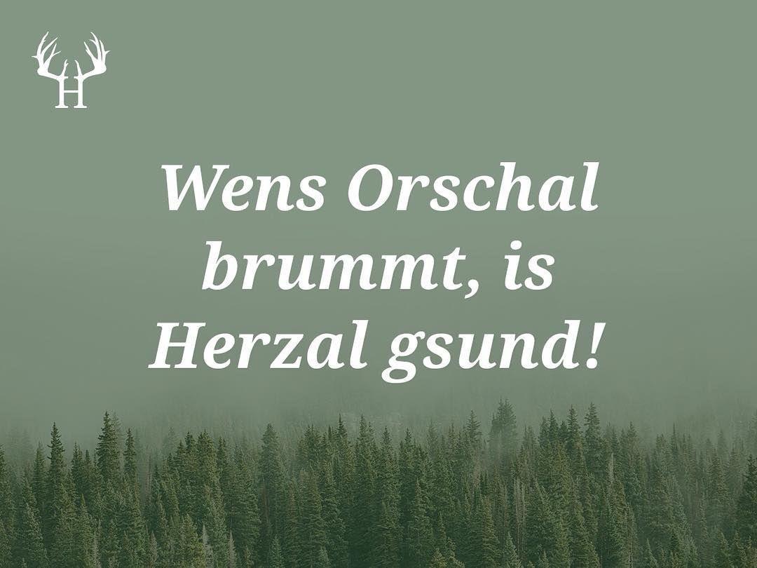 Wenns Orschal Brummt Is Herzal Gsund Bayerische Sprichworter Zum Pinnen Und Sammeln Egal Ob Wort Bayrische Spruche Bayerische Spruche Bayerische Worter