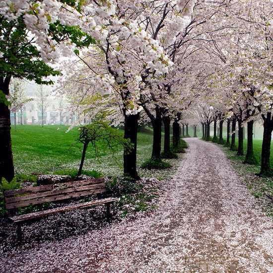 26 Magical Paths Begging To Be Walked. Find This Pin And More On KY Garden  Supply ...