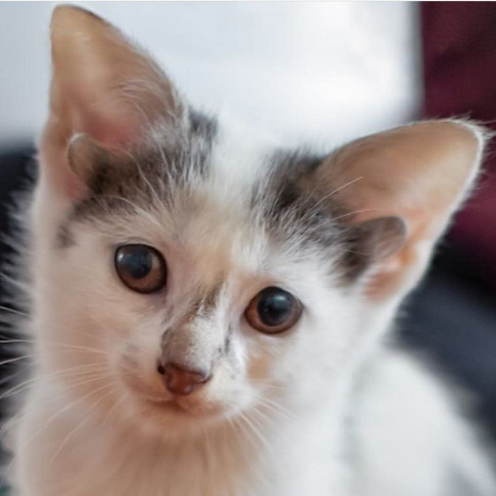 Kitten With 2 Extra Ears Born In Shelter The Same Day They Rescued His Mom Kitten Dog Cat Animal Rescue