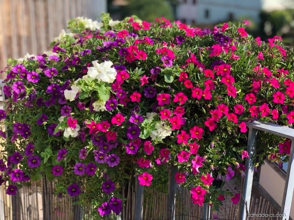 Petunie Surfinie Container Gardening Garden Floral Wreath