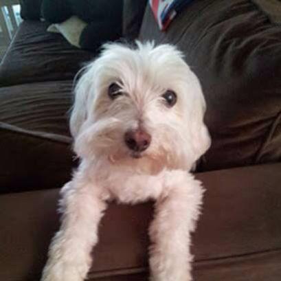 Pin On California Us Lost Dog Registry