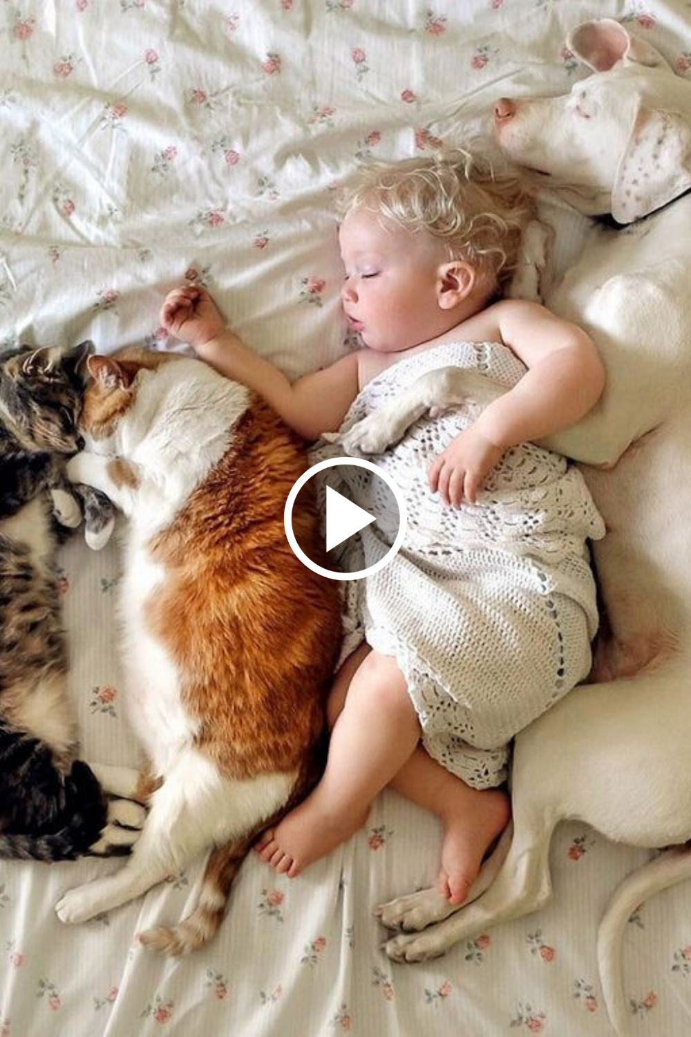 Adorable Babies Playing With Dogs And Cats In 2020 Baby Play Dog Cat Funny Babies