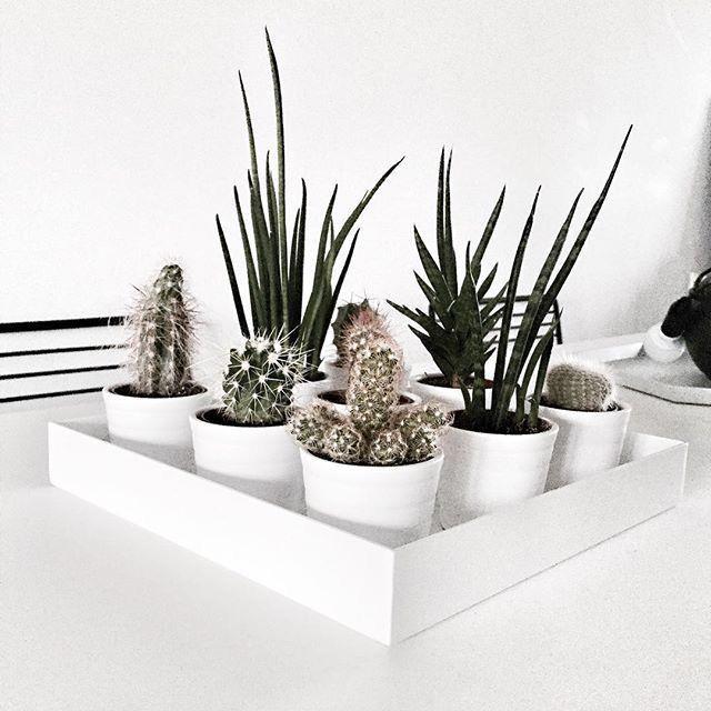 decor details ikea ekkor 2018 pinterest jardins. Black Bedroom Furniture Sets. Home Design Ideas