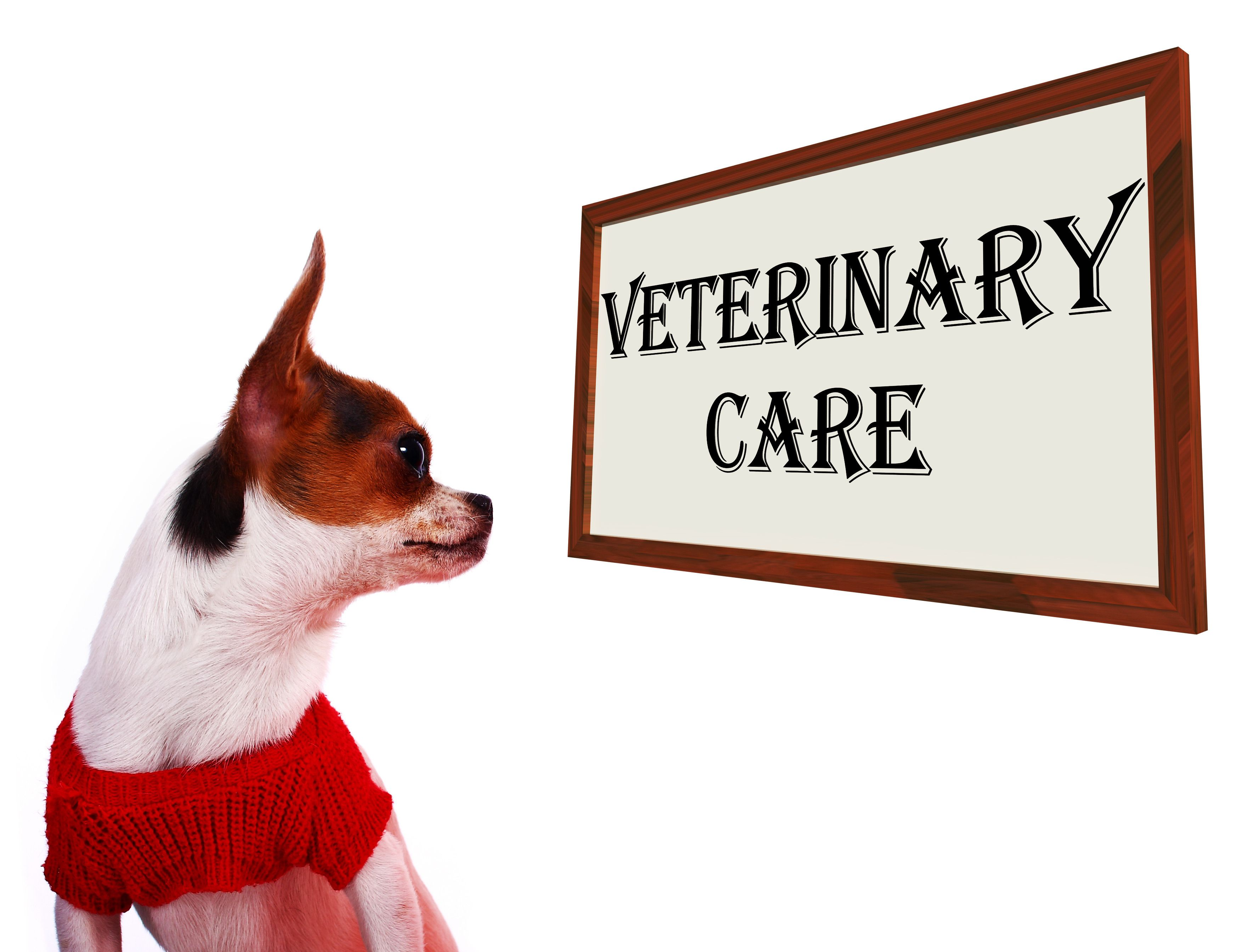 Good Digital Marketing Helps Your Veterinarian Practice Pet Day Pet Loss Grief Dogs Pooping