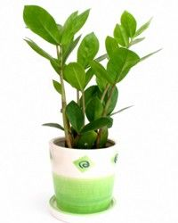Indoor Plants That Don T Need A Lot Of Light Low Light