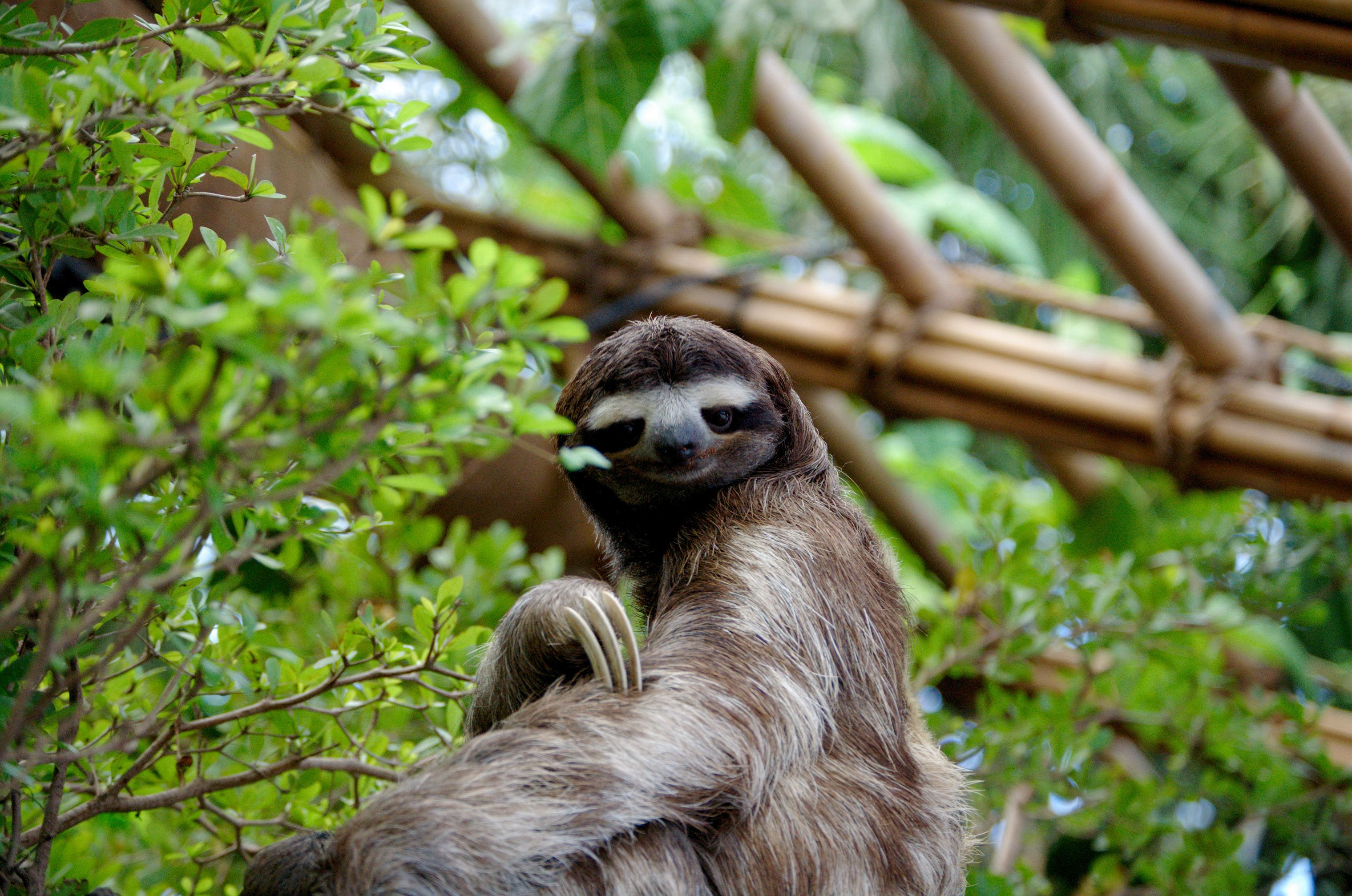 6 Different Types Of Sloths In The Rainforest With Pictures And