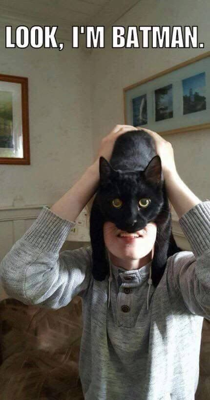 Best Funny Cats Would have been funnier if it said catman instead of batman lol Would have been funnier if it said catman instead of batman lol - Funny Cat Quotes #funnycat #catquotes #cats 1