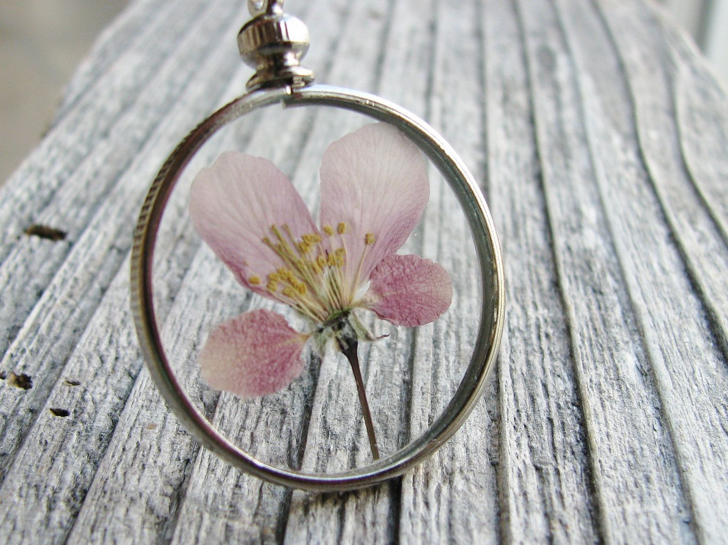 Framed flower pendant pressed flower glass necklace purple flowering framed flower pendant pressed flower glass necklace purple flowering crabapple tree sterling silver chain nature inspired mozeypictures Choice Image