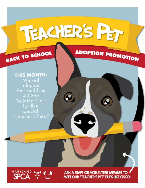 Teacher S Pet Back To School Adoption Promotion Pet Adoption Event Animal Rescue Fundraising Dog Adoption Event