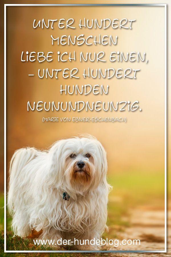 Coole, schöne, besinnliche Sprüche und Zitate über Hunde ...