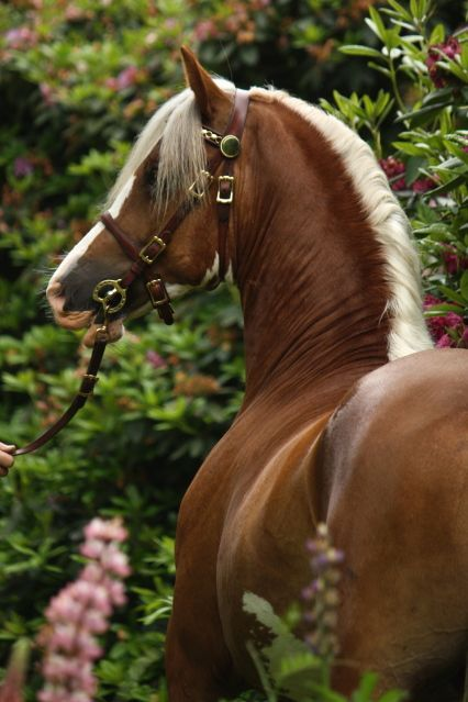 Stunning horse photography, gorgeous colored horse with a beautiful face.