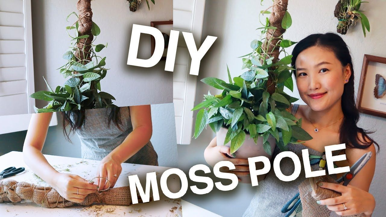 How to make a moss pole install for your vining plants