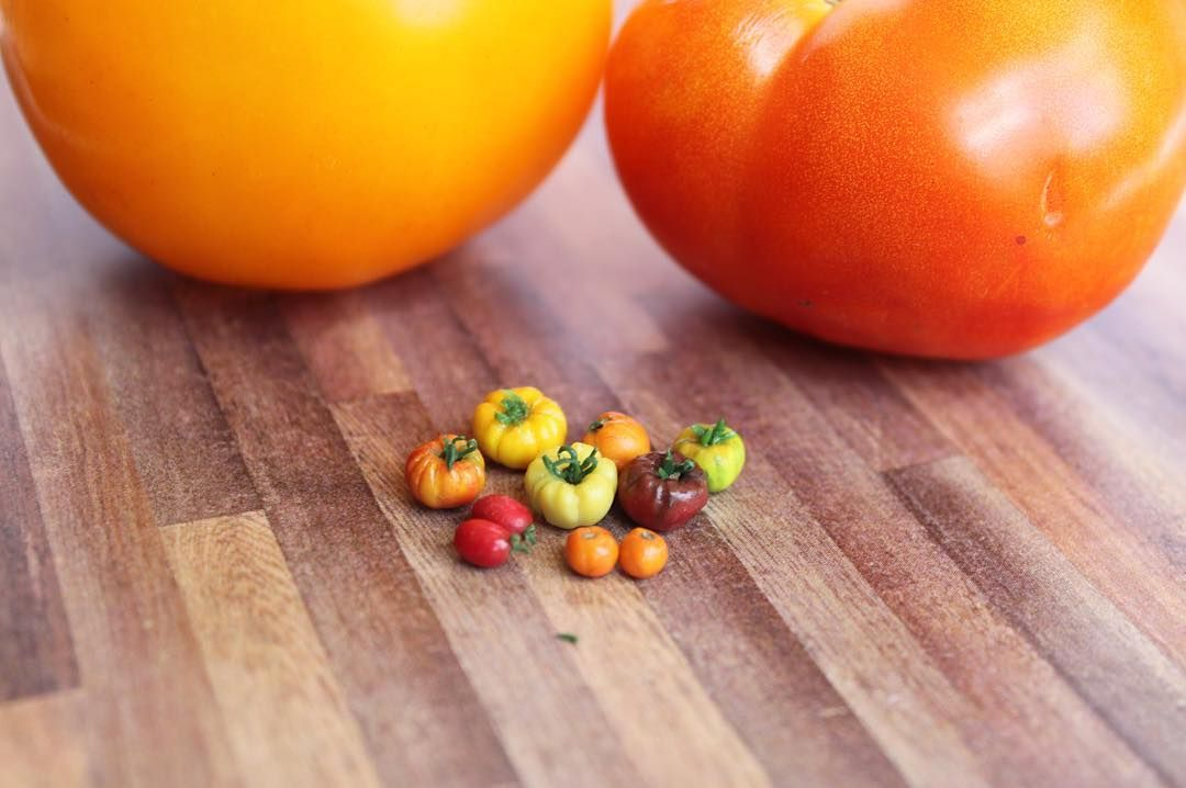 Tiny heirloom tomatoes next to some real tomatoes from our garden #tinyfood…