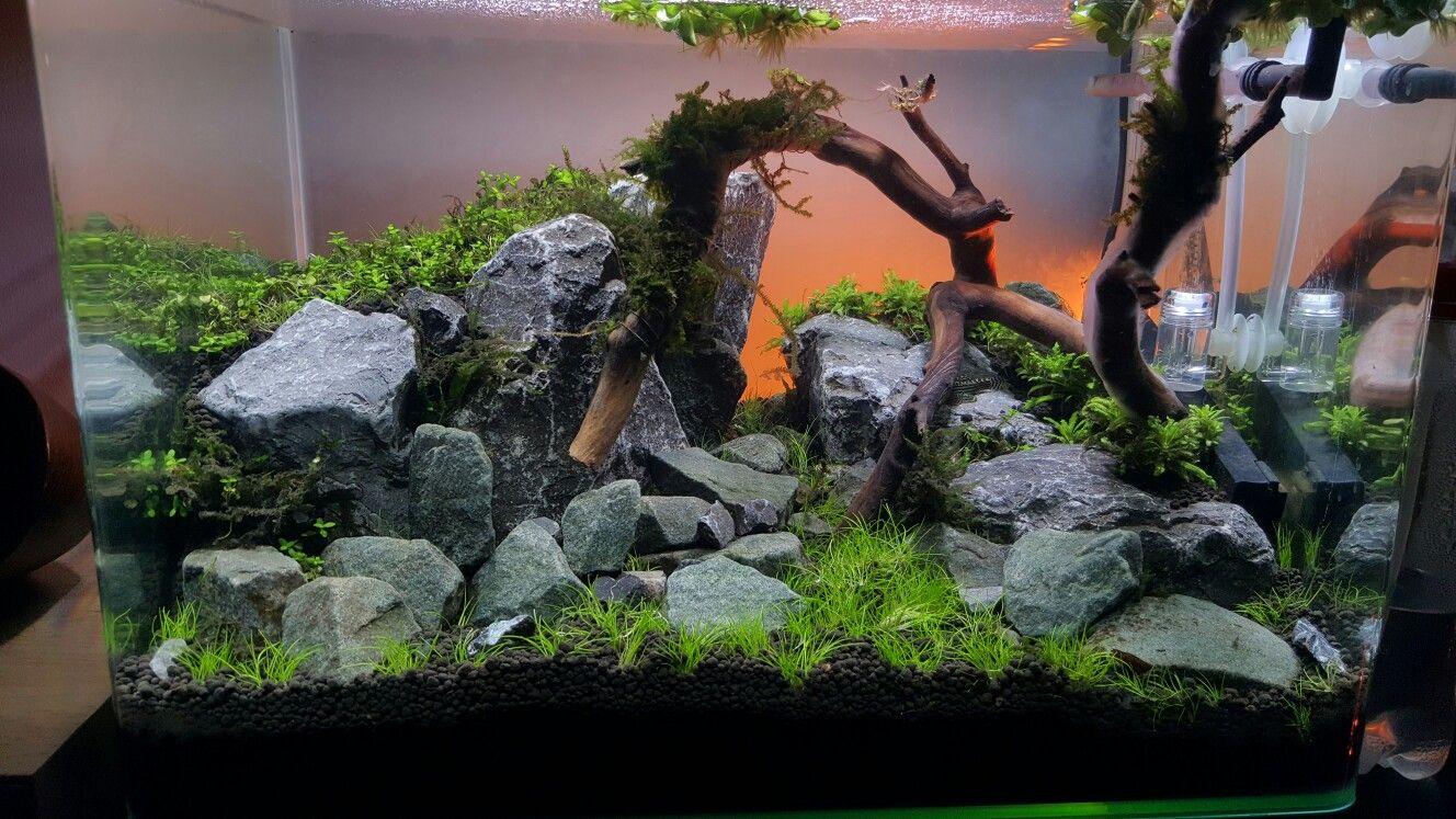 Aquascape Dennerle Scaper S Tank 35l Nano Aquarium Aquarium