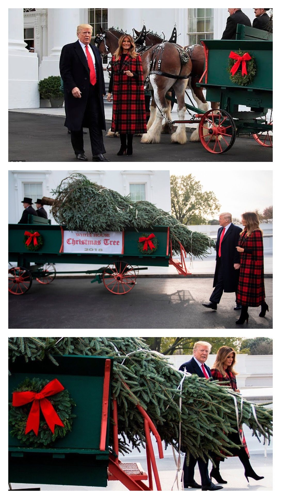 President First Lady Melania Trump Arrival Of Christmas Tree 2018