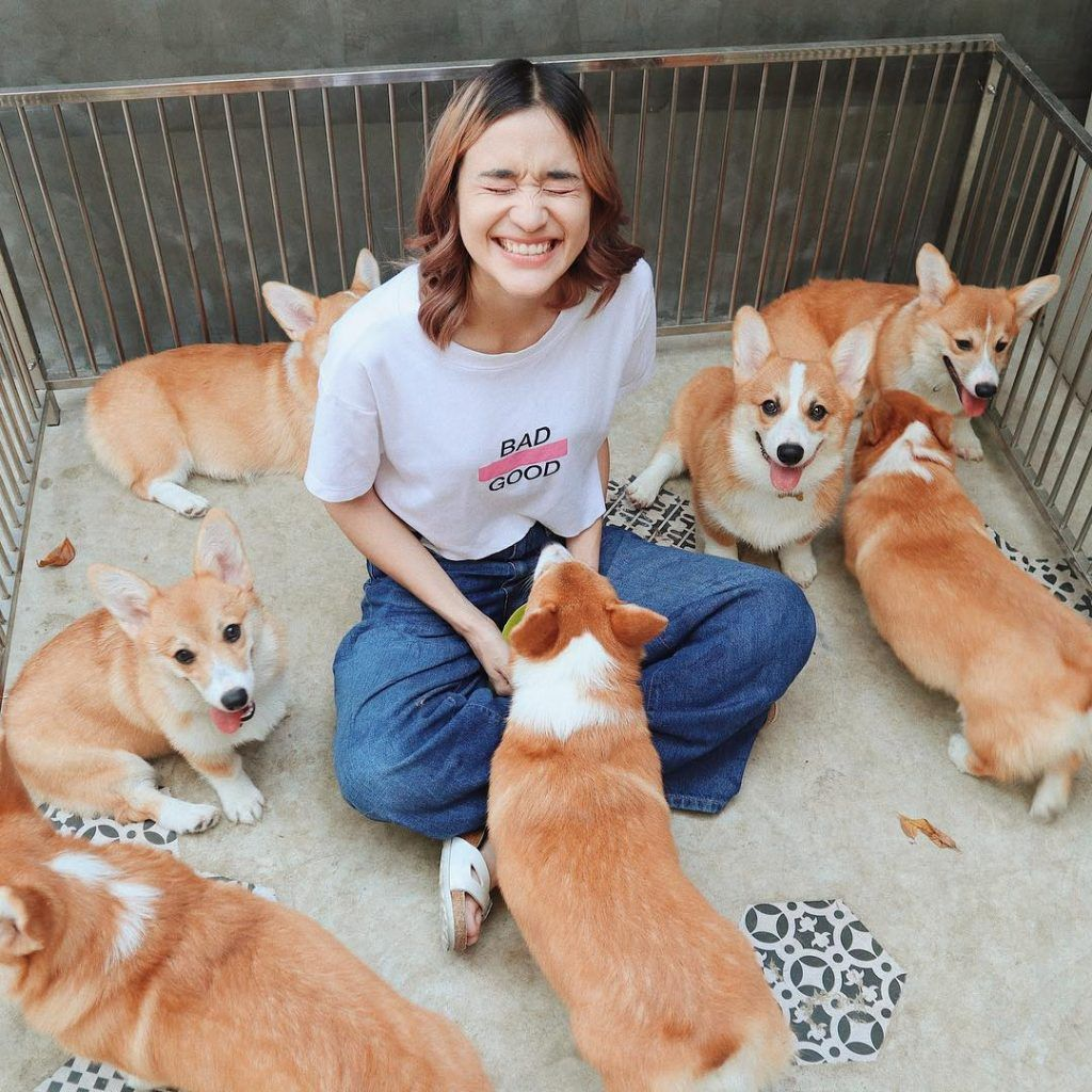 Woman Opens A Corgi Cafe After A Surprise Litter Of Pups And The