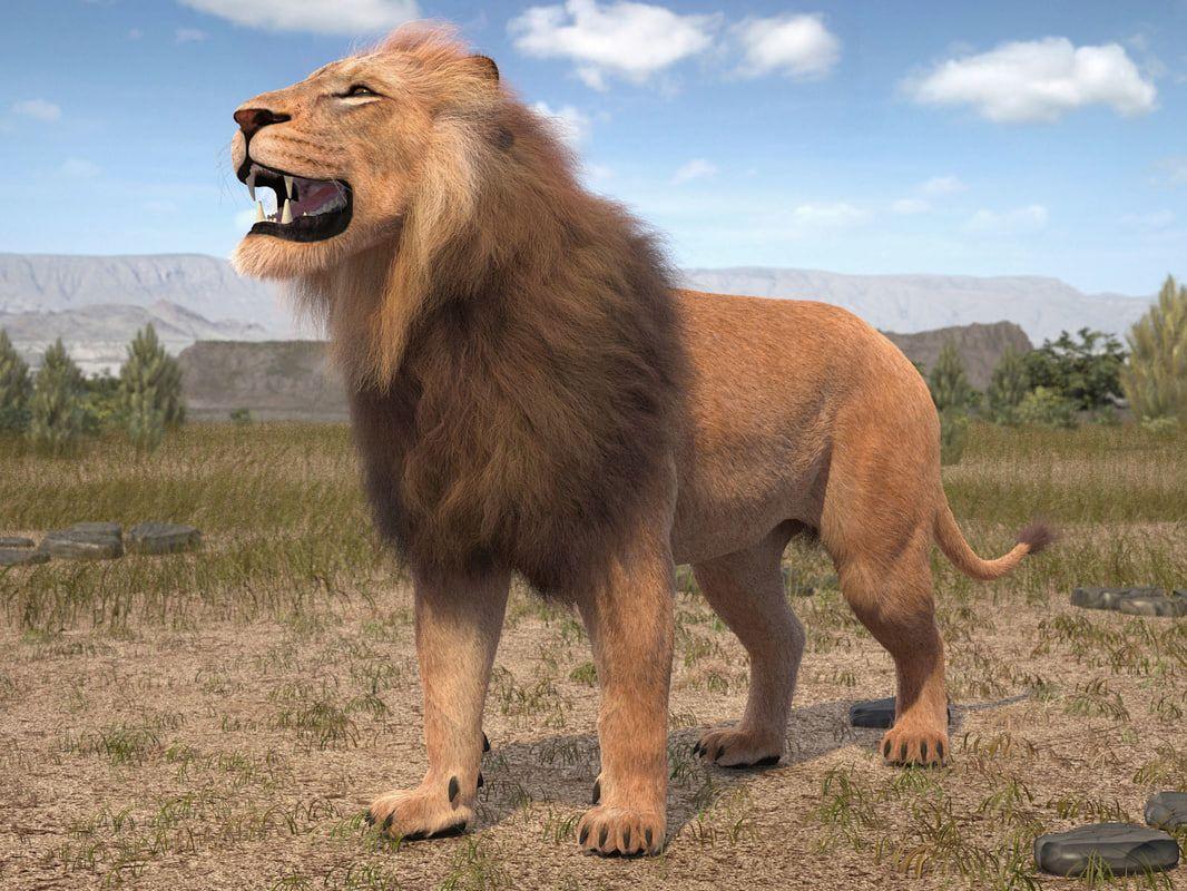 lion king hair fur 3d model Lion, Fur, Big cats