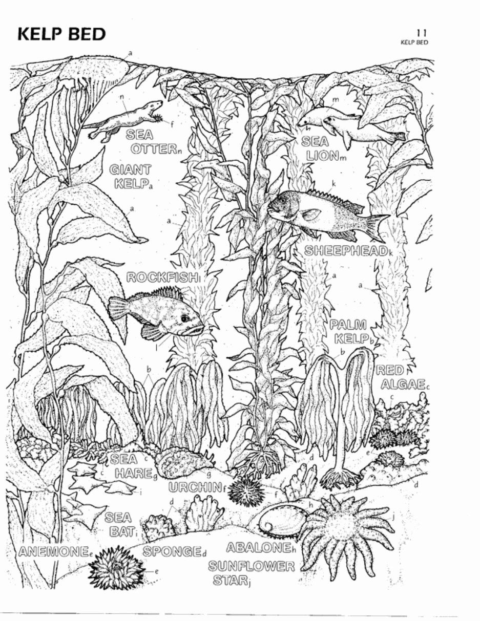 The Biology Coloring Book Beautiful Color Plate 11 Kelp Bed Cecil S Nursery Kelp Forest Coloring Books Coloring Pages Shark Coloring Pages [ 1213 x 937 Pixel ]