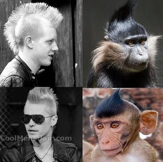 Monkey Hair Style For More Funny Images Visit Www Funnyneel Com Follow Us Www Pinterest Com Webneel Funny Neel Com Funny Images Hair Styles Style