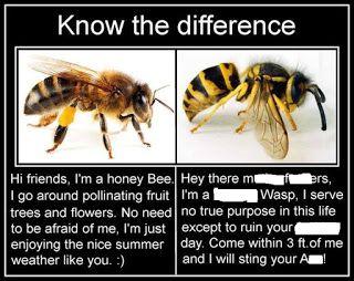 Bee Vs Wasp Memes Perpetuate Ignorance Stupid Funny Memes Funny Relatable Memes Stupid Funny