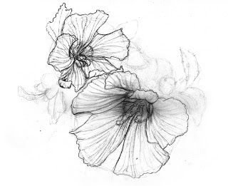Rose Of Sharon Ink Pinterest