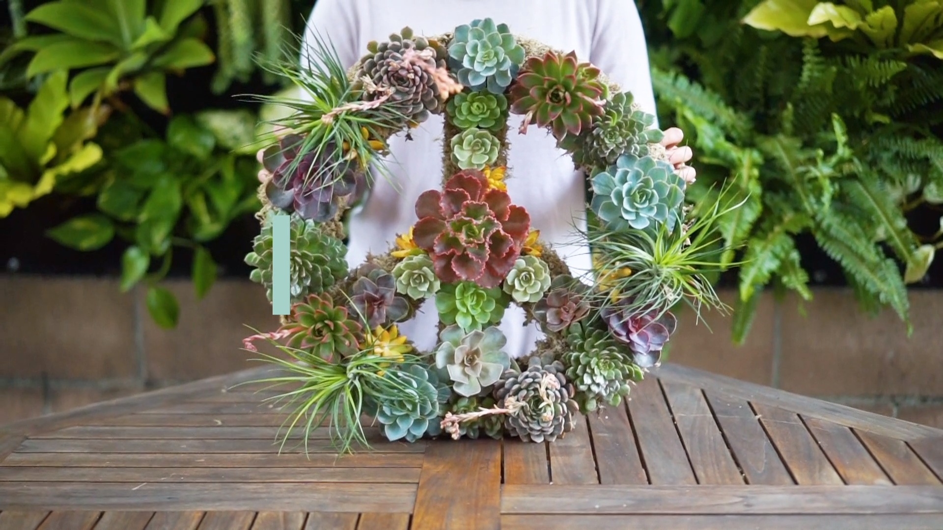 Photo of How to Plant a Succulent Peace Wreath