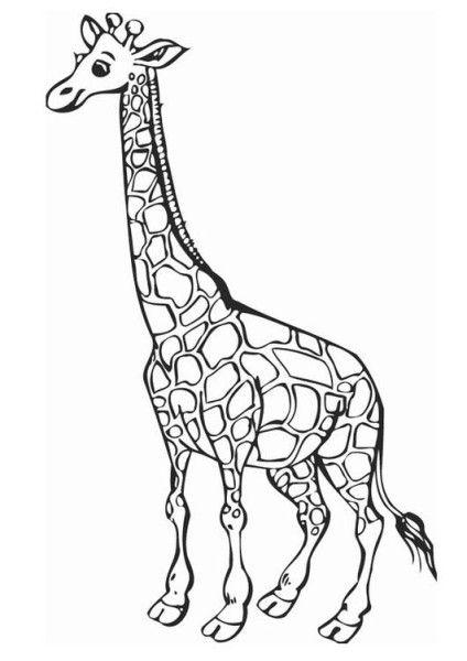 Giraffe Ausmalbild 03 Girafas Desenhos Colorir