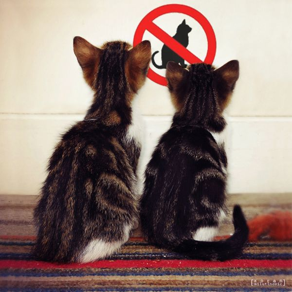 No cats allowed!!!
