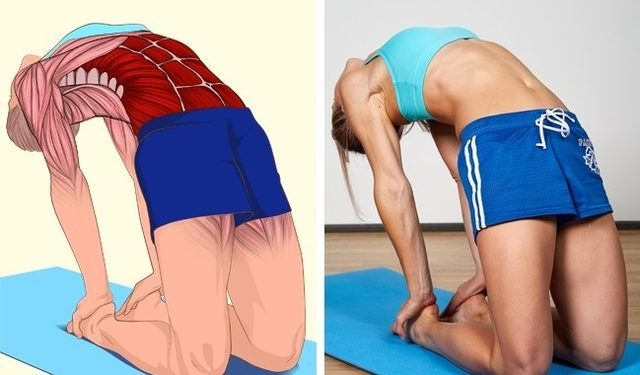 İlgili kaslar Karın ve abdominal dış oblik karın bölgenizin yan ve ön kasları kaslar Görseldeki gibi diz üstünde durun ellerinizi arkanıza yaslay...