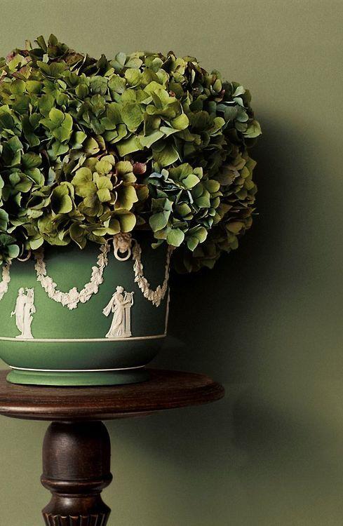 Antique Hydrangeas In Jasperware