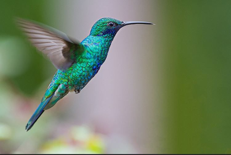 Fly To The Imposible Hummingbirds Flying Video Colibri Colnado Batiendo Sus Alas Hummingbirds Birds Nature Wildlife Aves Colib Hummingbird Bird Flying