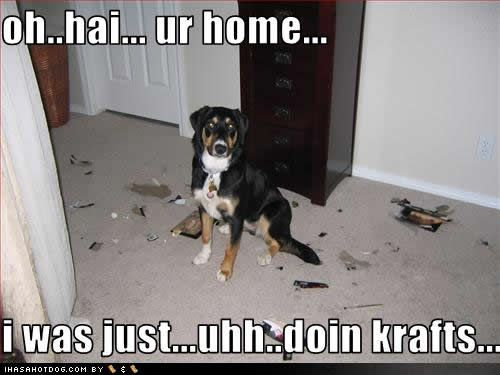 Funny Dogs With Captions Funny Dogs Funny Dog Pictures With Captions