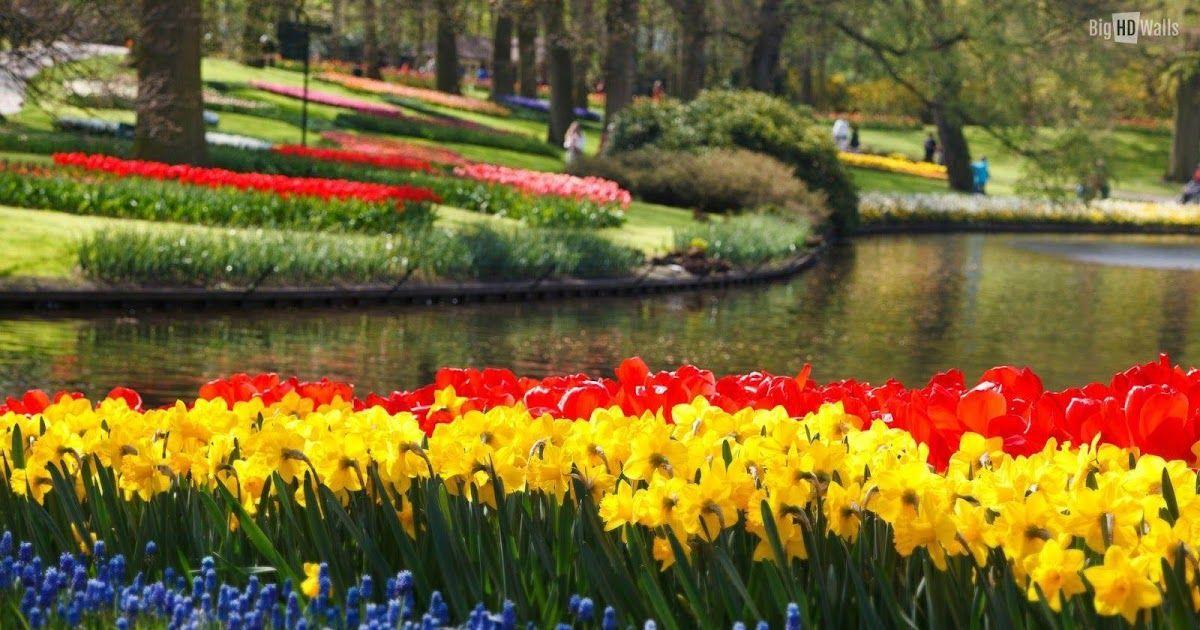 15 Wallpaper Pemandangan Bunga Pemandangan Alam Pohon Foto Gratis Di Pixabay Selain Itu Gambar Pemandangan Alam Yang I Di 2020 Kebun Bunga Bunga Narsis Pemandangan