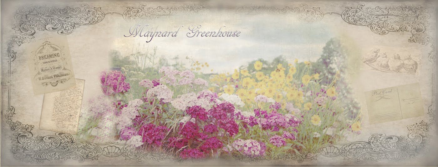 Maynard Greenhouse.  Vintage goodness.