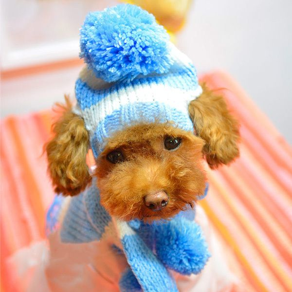 Awesome Knitted Dog Hats Patterns Free Funke It Yourself