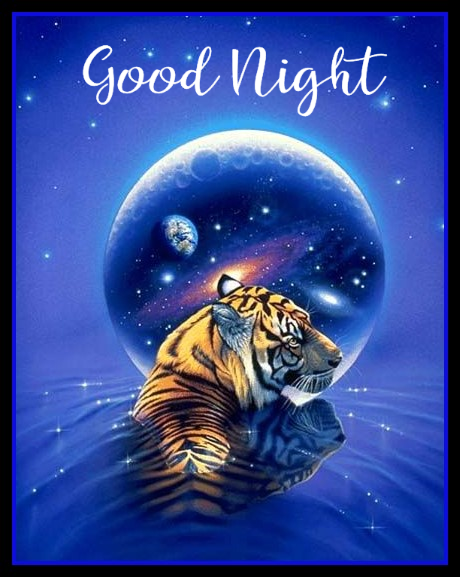 Good Night | Tiger art, Art, Tiger pictures