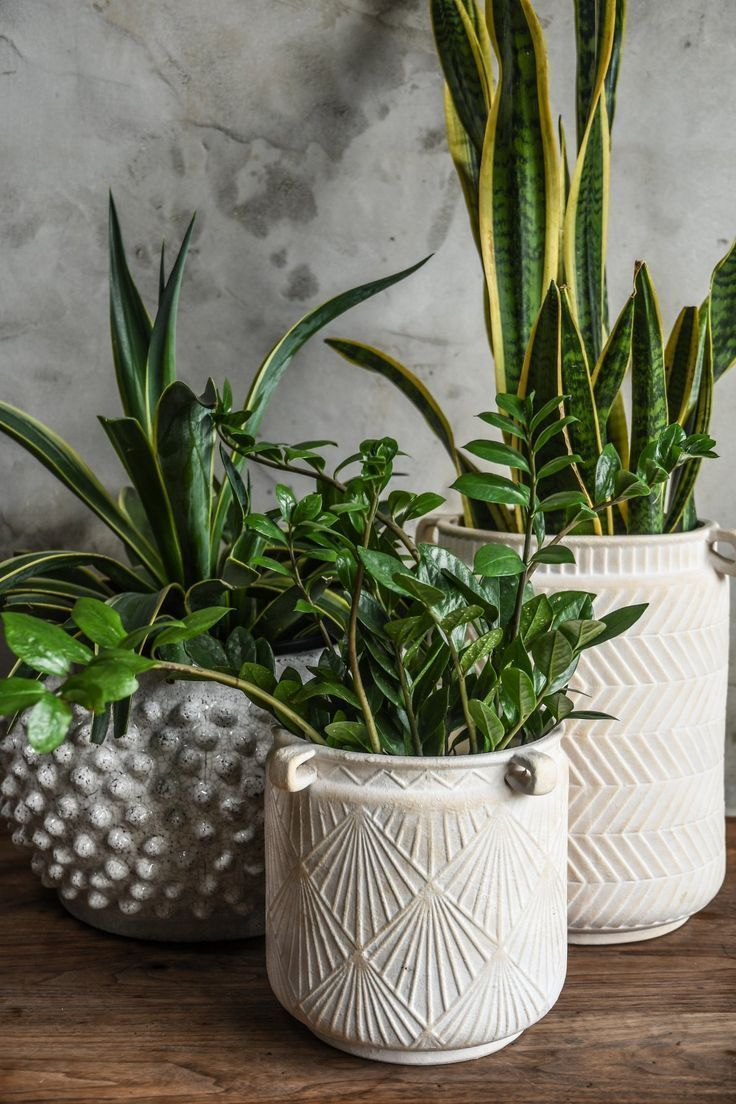 Hayes Planters | CB2