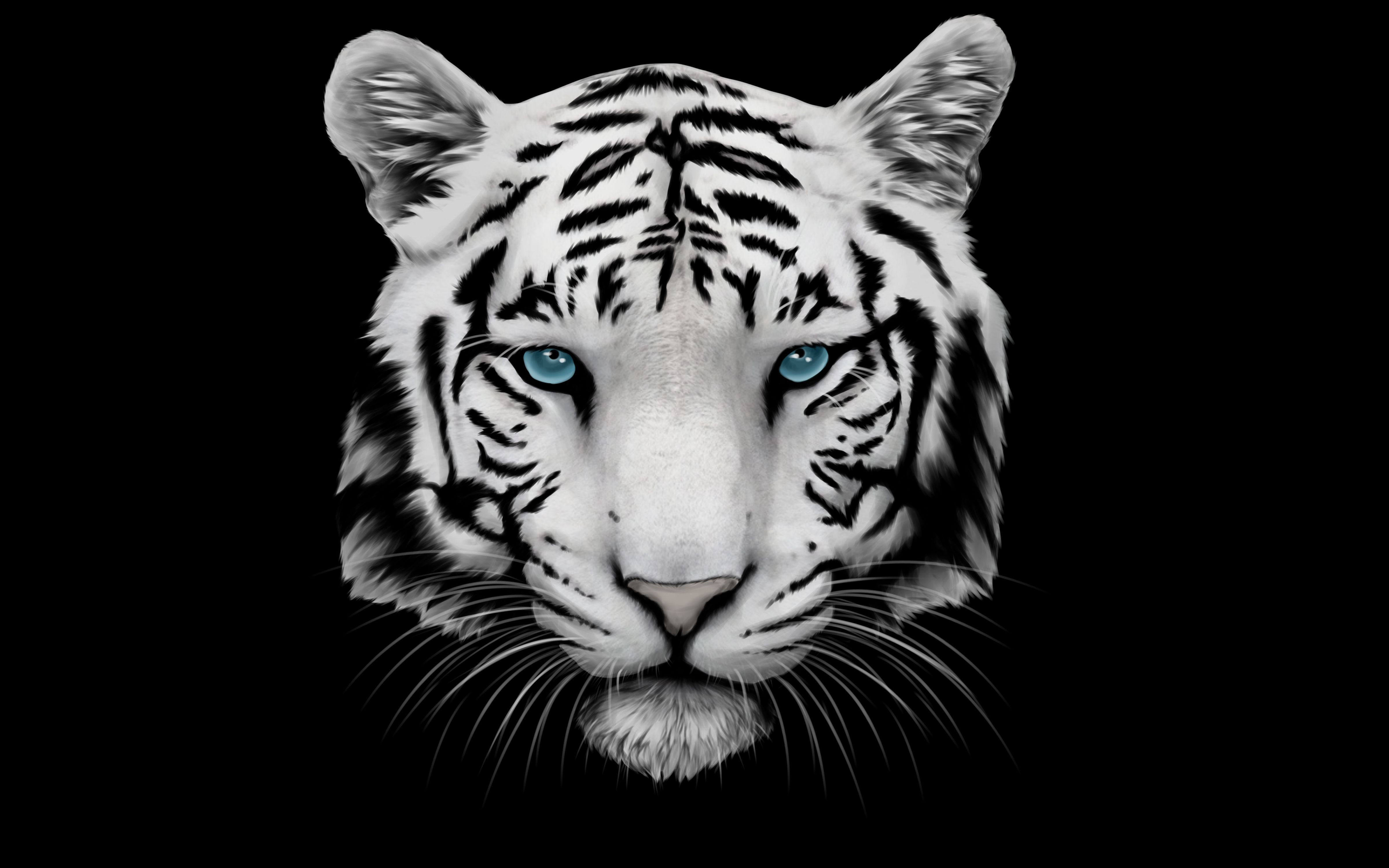 White Tiger Wallpaper High Definition Animals Wallpapers