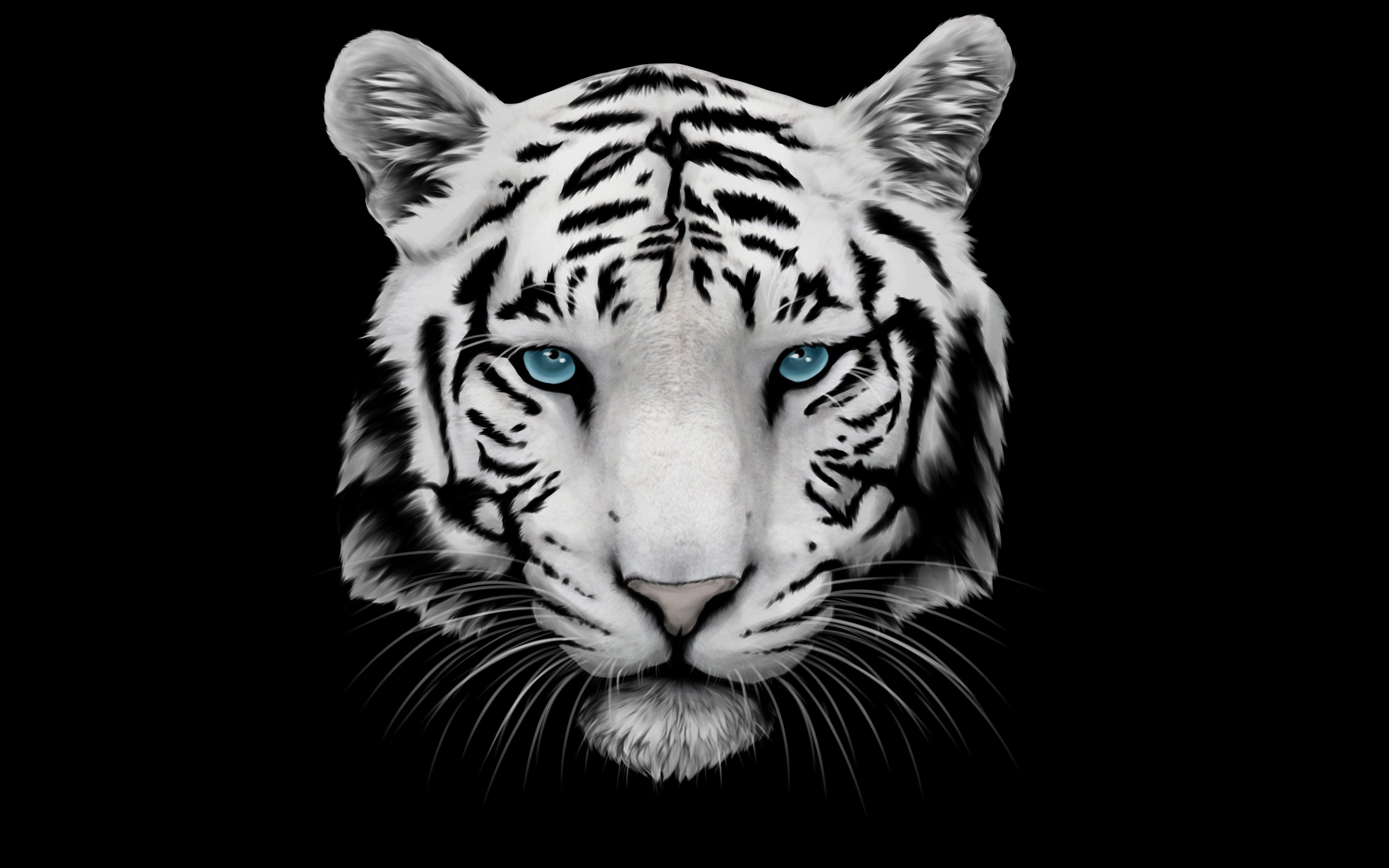 White Tiger Wallpaper High Definition Tiger wallpaper