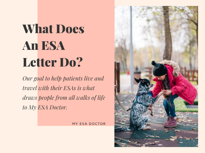 What Does An ESA Letter Do? in 2020 Emotional support