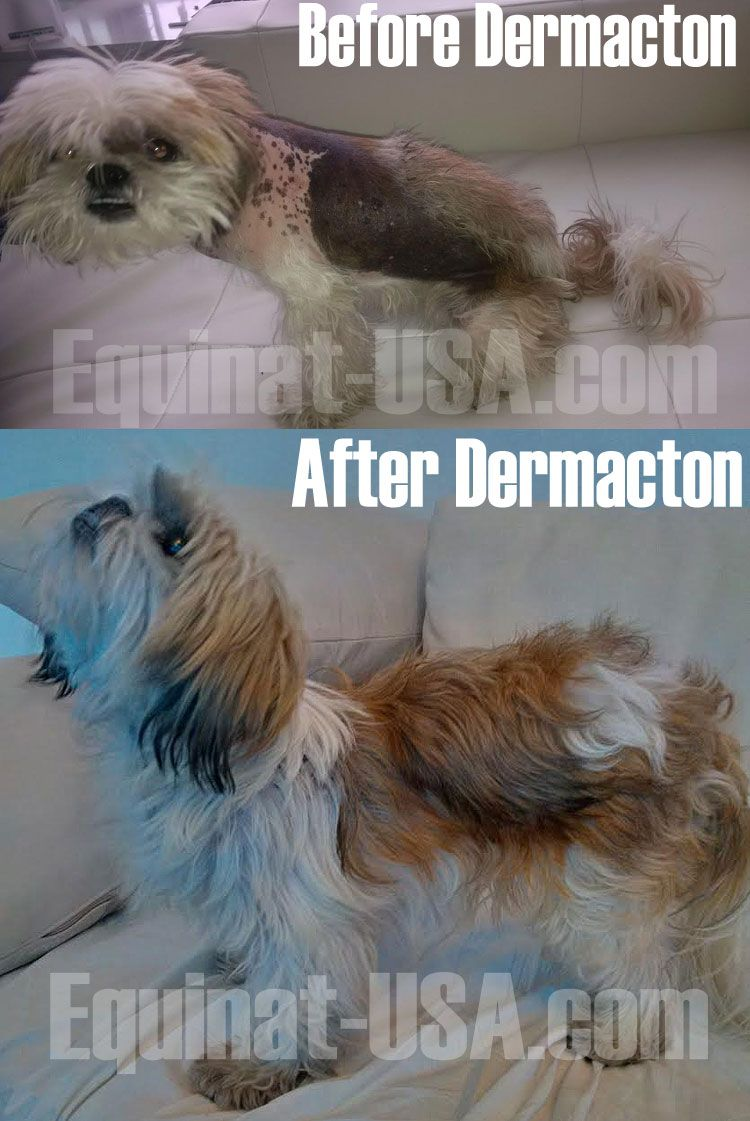 Dermacton Reviews Shih Tzu Coconut Oil For Dogs Yeast